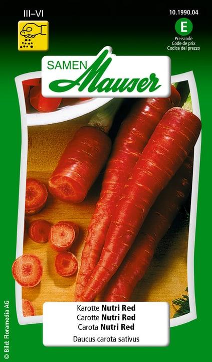 Carota Nutri Red Semente Samen Mauser 650110905000 Contenuto 0.5 g (ca. 100 piante o 2 - 3 m²) N. figura 1