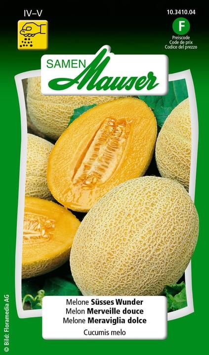 Melone meraviglia dolce Semente Samen Mauser 650112501000 Contenuto 10 semi (ca. 8 piante o 6 - 8 m²) N. figura 1