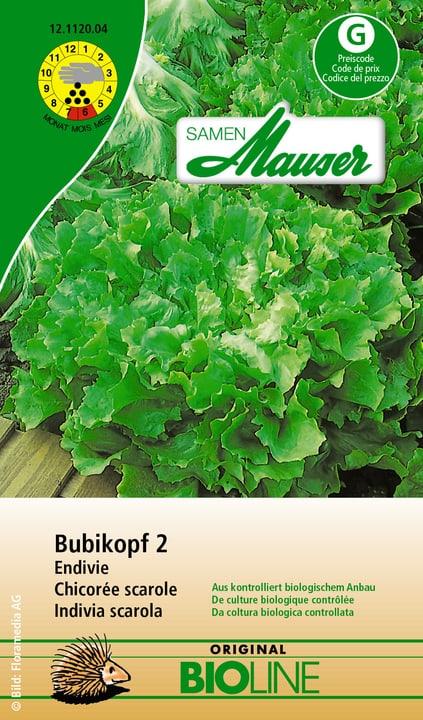 Chicorée scarole Bouclee Samen Mauser 650110103000 Contenu 0.1 (env. 50 plantes ou 5 m²) Photo no. 1