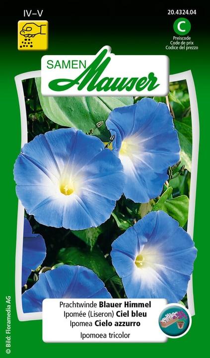 Ipomea Cielo azzurro Semente Samen Mauser 650104303000 Contenuto 150 semi (ca. 80 piante o 3 m²) N. figura 1