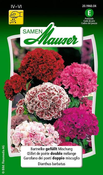 Oeillet de poète double mélange Samen Mauser 650103103000 Contenu 0.5 g (env. 50 plantes ou 3 - 4 m²) Photo no. 1