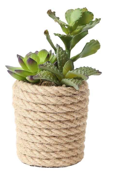 Art succulente in vaso juta Do it + Garden 656549100002 Taglio L: 12.0 cm x P: 11.0 cm x A: 15.0 cm N. figura 1