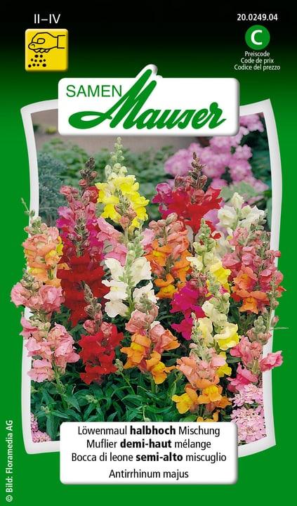 Bocca di leone semi-alto miscuglio Samen Mauser 650101001000 Contenuto 0.5 g (ca. 100 piante o 4 m²) N. figura 1