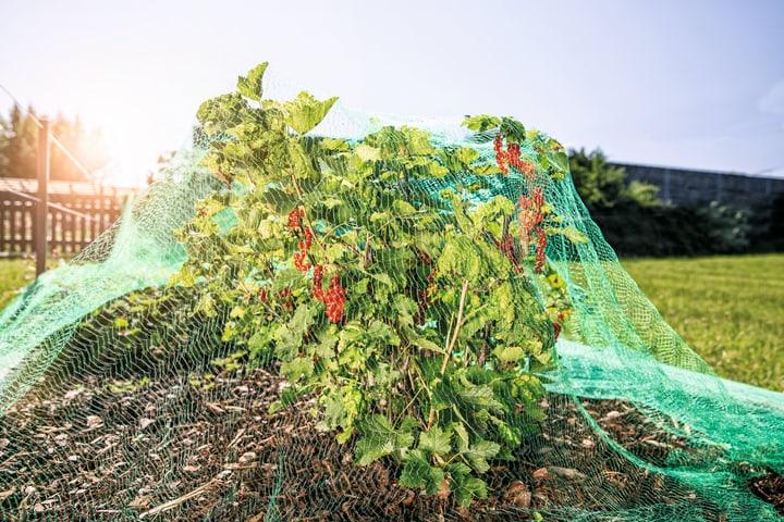 Rete protezione contro uccelli Aiuti per il giardinaggio Windhager 631113300000 N. figura 1