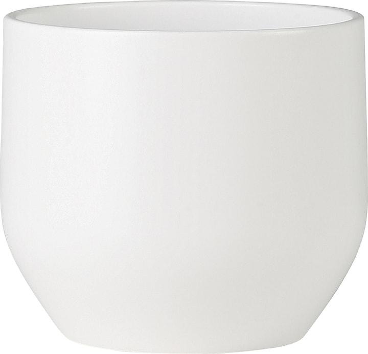 Coprivaso lucido Scheurich 657477600000 Taglio ø: 16.0 cm Colore Bianco N. figura 1