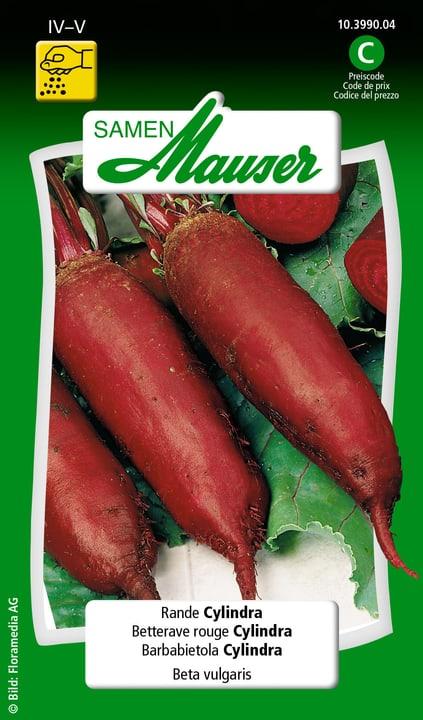 Barbabietola Cylindra Semente Samen Mauser 650113701000 Contenuto 5 g (ca. 150 - 200 piante o 4 m²) N. figura 1