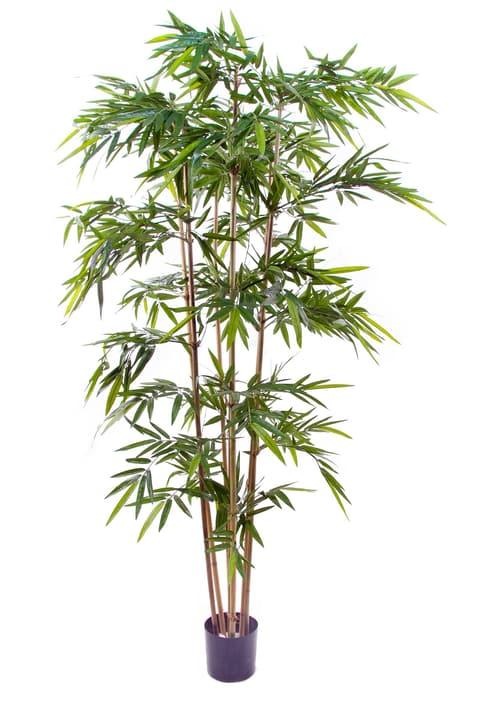 bambus excellent green bamboo shoots sticks dracaena stock image with bambus bambus stebla. Black Bedroom Furniture Sets. Home Design Ideas