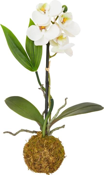ORCHIDEE Fleur artificielle 440739500000 Photo no. 1