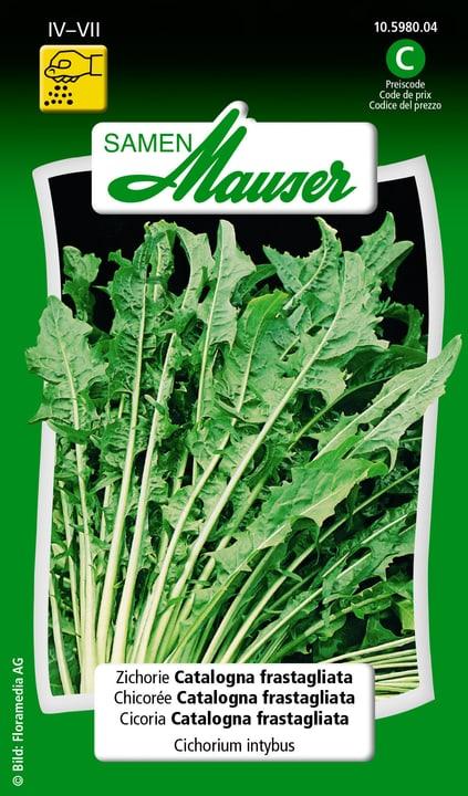 Cicoria Catalogna frastagliata Semente Samen Mauser 650116401000 Contenuto 2.5 g (ca. 200 piante o 5 - 8 m²) N. figura 1