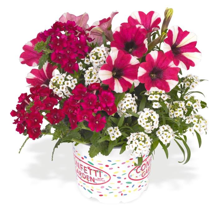Confetti Garden Yolo 302094600000 Bild Nr. 1