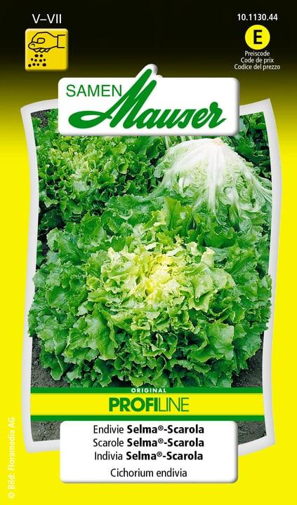 Scarole Selma®-Scarola Samen Mauser 650110104000 Contenu 1 g (env. 250 plantes ou 8 - 20 m²) Photo no. 1