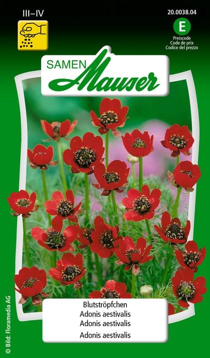 Adonis àestivalis Semences de fleurs Samen Mauser 650101701000 Contenu 2.5 g (env. 100 plantes ou 3 - 4 m²) Photo no. 1