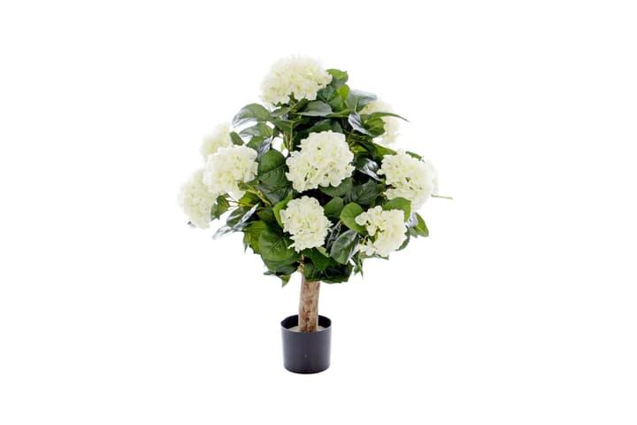 Hydrangea creme Do it + Garden 658955300000 Bild Nr. 1