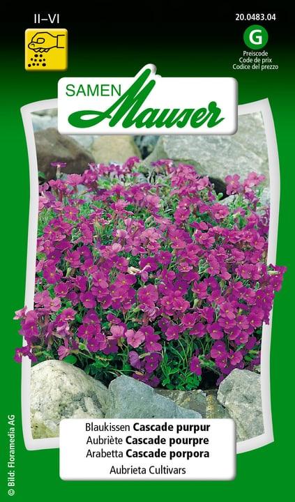 Aubriète Cascade pourpre Samen Mauser 650101301000 Contenu 0.5 g (env. 200 plantes ou 3 - 4 m²) Photo no. 1