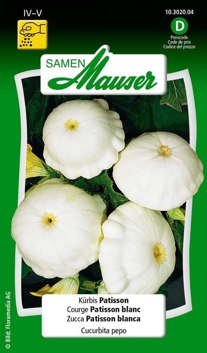 Zucca Patisson Semente Samen Mauser 650111806000 Contenuto 2.5 g (ca. 10 piante o 8 - 10 m²) N. figura 1