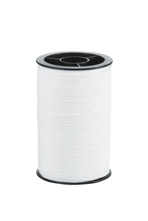 POLY Nastro da regalo 440615802010 Colore Bianco Dimensioni L: 10.0 mm N. figura 1