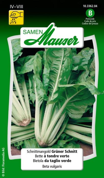 Bietola da taglio verde Semente Samen Mauser 650114902000 Contenuto 10 g (ca. 300 piante o 10 m²) N. figura 1