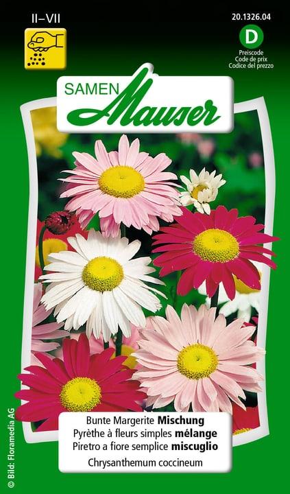 Piretro a fiore semplice miscuglio Samen Mauser 650101801000 Contenuto 0.5 g (ca. 50 piante o 4 - 5 m²) N. figura 1