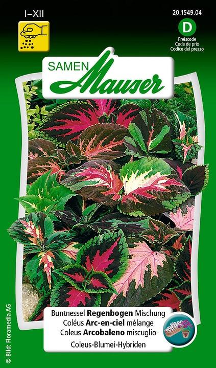 Buntnessel Regenbogen Mischung Samen Mauser 650102701000 Inhalt 0.1 g (ca. 50 Pflanzen oder 4 m² ) Bild Nr. 1