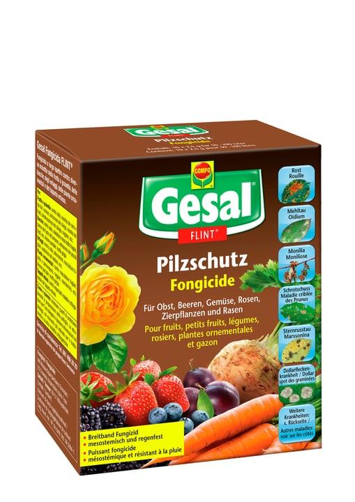 Pilzschutz FLINT, 10 x 2,5 g Compo Gesal 658506900000 Bild Nr. 1