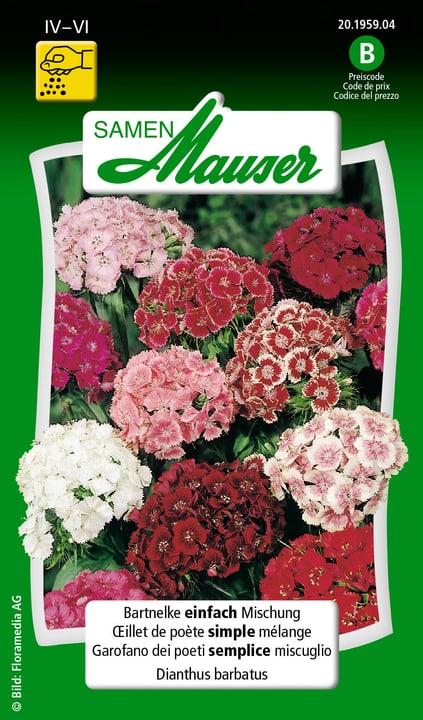 Bartnelke einfach Mischung Samen Mauser 650103102000 Inhalt 0.5 g (ca. 50 Pflanzen oder 3 - 4 m² ) Bild Nr. 1