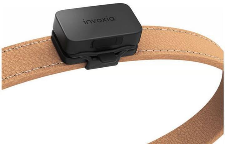 Invoxia PET Tracker nur in der Schweiz n Halsband 785300150011 Photo no. 1