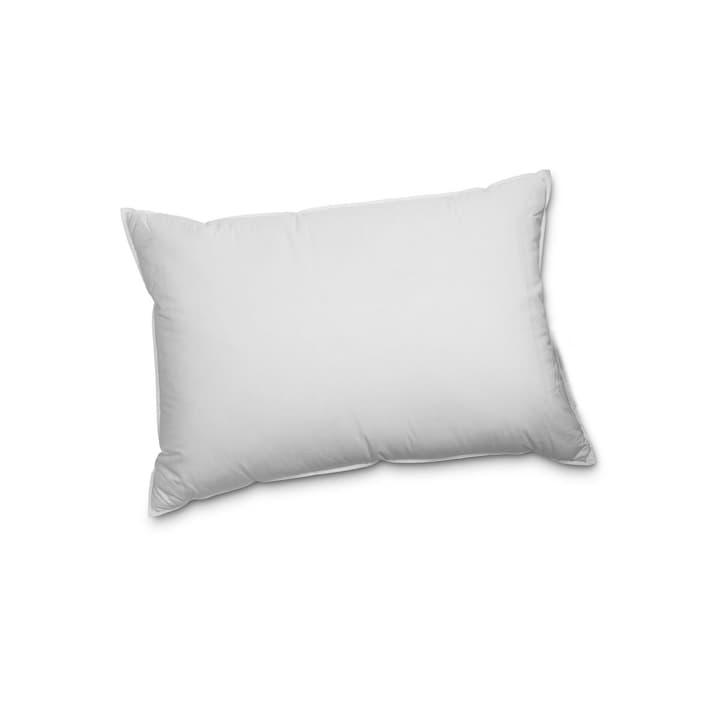 OUTLAST REGULAR Federnkissen mit Wärmeregulierung 376053200000 Farbe Weiss Grösse L: 50.0 cm x B: 70.0 cm Bild Nr. 1