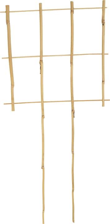 Puntelli per pianti di bambù Asta per piante Windhager 631188800000 N. figura 1