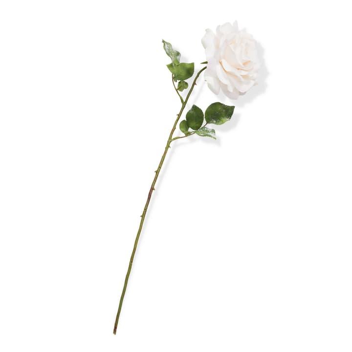 MADONNA Kunstblume 390189400000 Grösse H: 66.0 cm Farbe Rosa Bild Nr. 1