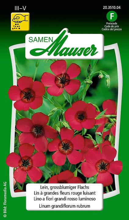 Lino a fiori grandi rosso luminoso Samen Mauser 650104901000 Contenuto 2.5 g (ca. 70 piante o 5 - 7 m²) N. figura 1