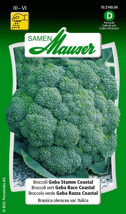 Broccoli Geba Stamm Coastal Samen Mauser 650109201000 Inhalt 1 g (ca. 60 Pflanzen oder 10 m² ) Bild Nr. 1
