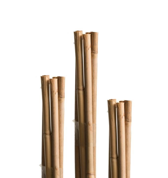 Sostegno di bambù Miogarden 631504400000 N. figura 1