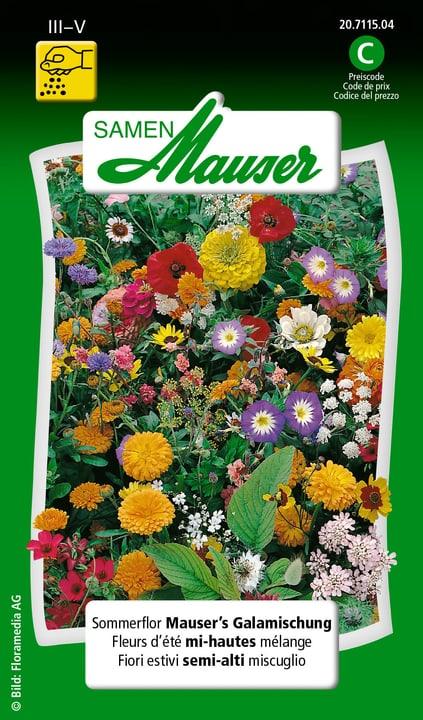 Sommerflor Mauser's Galamischung Samen Mauser 650107201000 Inhalt 2.5 g (ca. 150 Pflanzen oder 4 m²) Bild Nr. 1