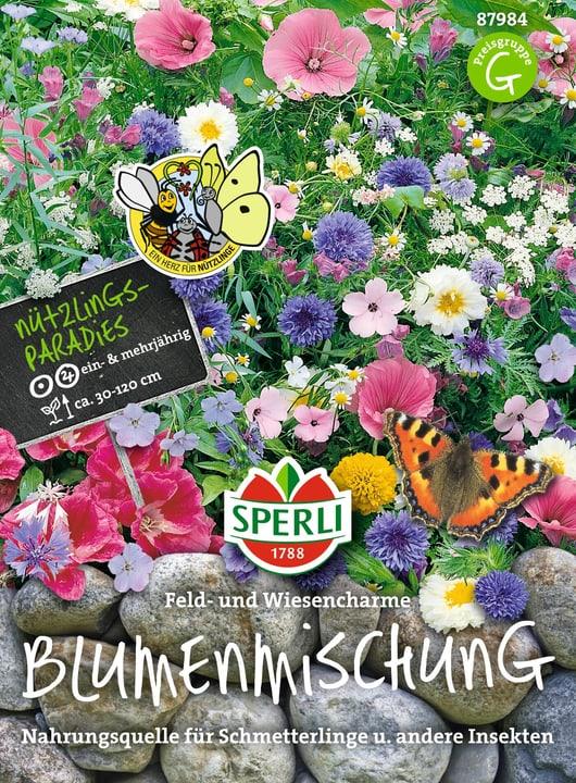 Blumenmischung Feld- und Wiesencharm Semences de fleurs Sperli 650177900000 Photo no. 1