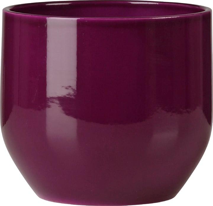 Coprivaso lucido Scheurich 657480300000 Taglio ø: 14.0 cm Colore Viola N. figura 1