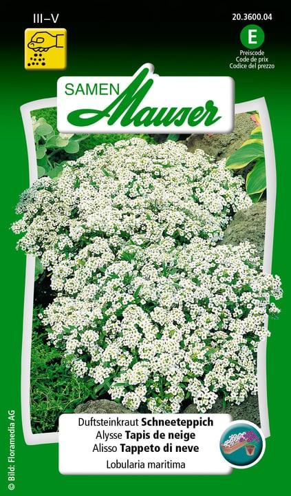 Alysse Tapis de neige Semence Samen Mauser 650105101000 Contenu 1 g (env. 200 plantes ou 6 - 8 m²) Photo no. 1