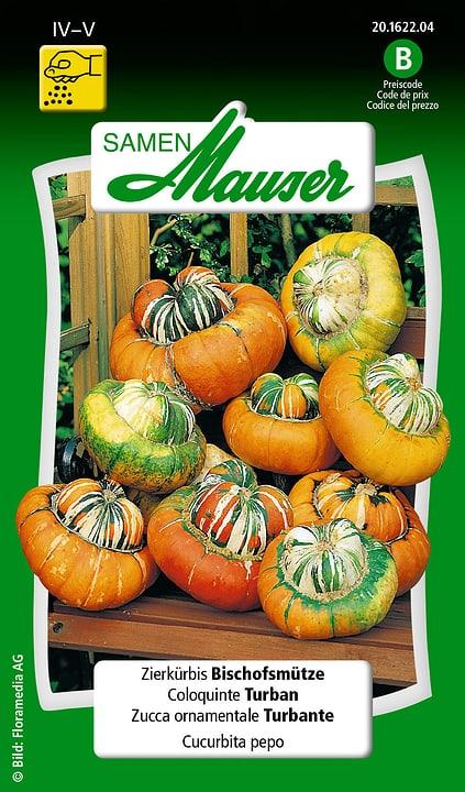 Zucca ornamentale Turbante Samen Mauser 650102901000 Contenuto 2.5 g (ca. 6 - 8 piante o 5 m²) N. figura 1