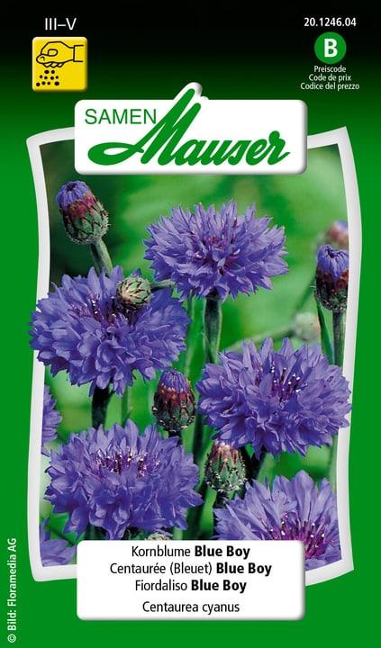 Kornblume Blue Boy Samen Mauser 650102101000 Inhalt 1 g (ca. 100 Pflanzen oder 3 - 4 m² ) Bild Nr. 1