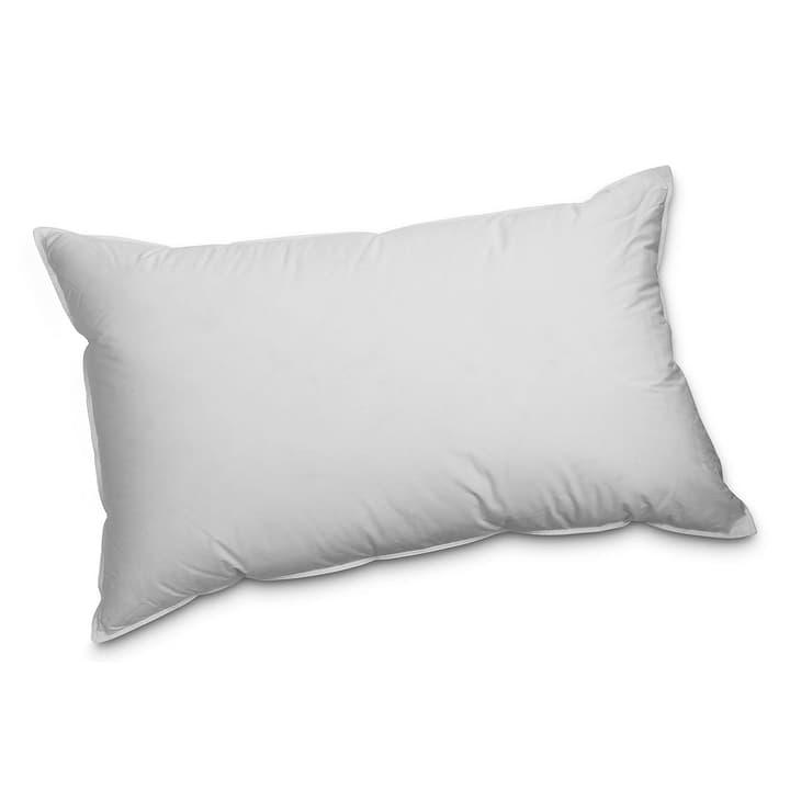 PREMIUM REGULAR Oreiller en plume exklusif pour un plaisir de dormir incomparable 376054300000 Dimensions L: 65.0 cm x L: 100.0 cm Couleur Blanc Photo no. 1
