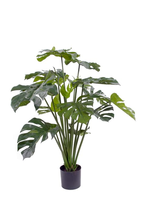 Monstera deliciosa Do it + Garden 659335800000 Bild Nr. 1
