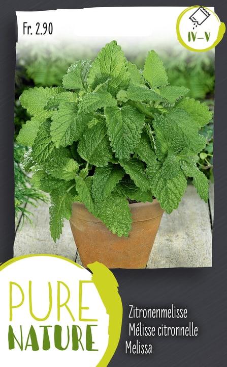 Mélisse citronnelle, vivace 1g Semences d'herbes arom. 287122100000 Photo no. 1