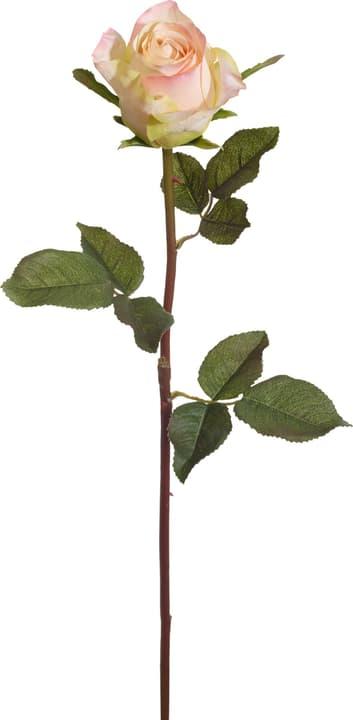 ROSES Fleur artificielle 440729100000 Photo no. 1