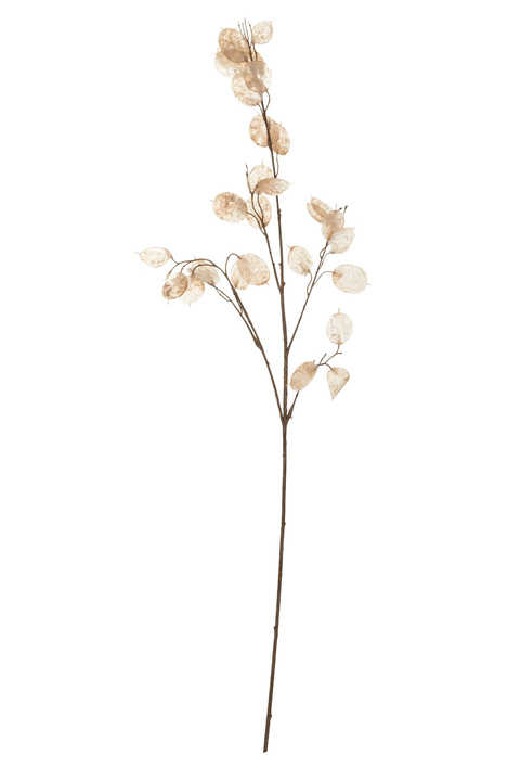 LUNARIA Fleur artificielle 440721600000 Photo no. 1