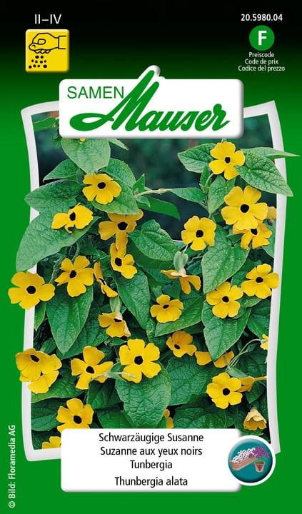 Thunbergia Semente Samen Mauser 650107601000 Contenuto 1 g (ca. 20 piante o 3 - 4 m²) N. figura 1