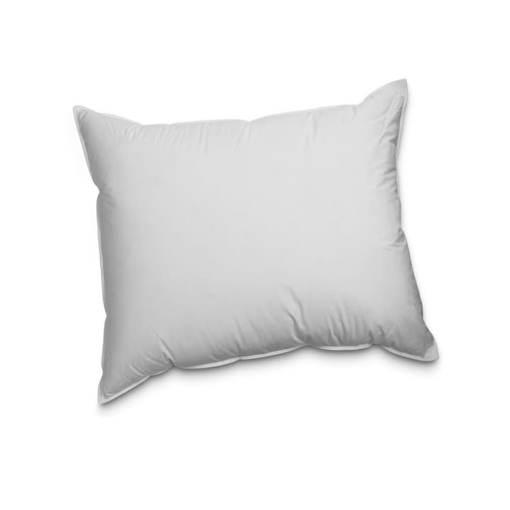 PREMIUM REGULAR Oreiller en plume exklusif pour un plaisir de dormir incomparable 376053700000 Dimensions L: 65.0 cm x L: 65.0 cm Couleur Blanc Photo no. 1