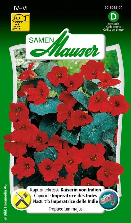 Nasturzio imperatrice delle Indie Semente Samen Mauser 650107804000 Contenuto 3 g (ca. 25 piante o 3 m²) N. figura 1
