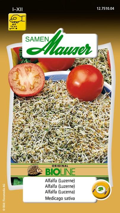 Germes Alfalfa (Luzerne) Semence Samen Mauser 650108501000 Contenu 70 g Photo no. 1