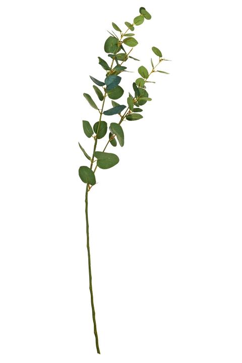 RAMEAU D'EUCALYPTUS Fleur artificielle 440721500000 Photo no. 1