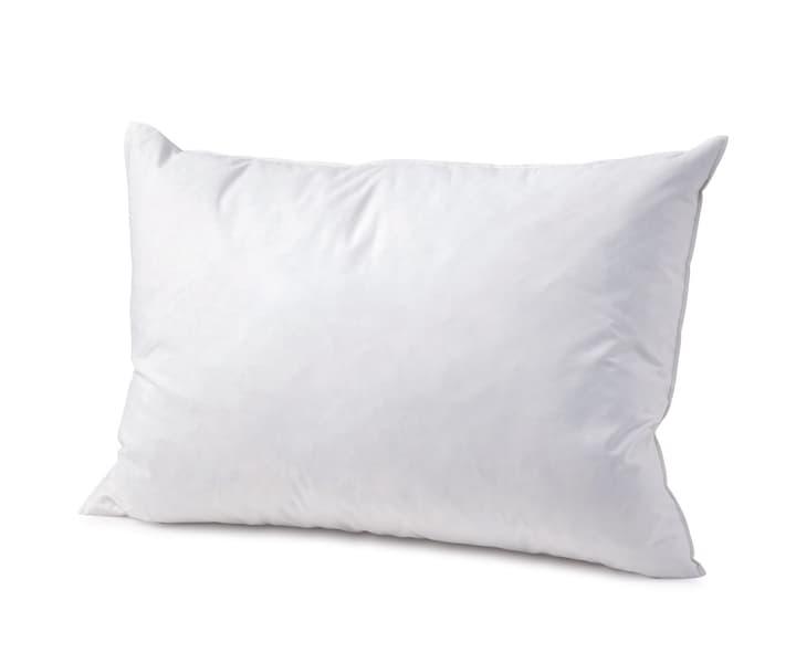 MEZZO FORTE Cuscino di piume 451746310610 Colore Bianco Dimensioni L: 65.0 cm x P: 65.0 cm N. figura 1