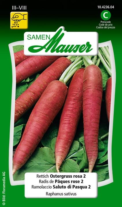 Ramolaccio Saluto di Pasqua 2 Semente Samen Mauser 650113905000 Contenuto 5 g (ca. 200 piante o 4 m²) N. figura 1